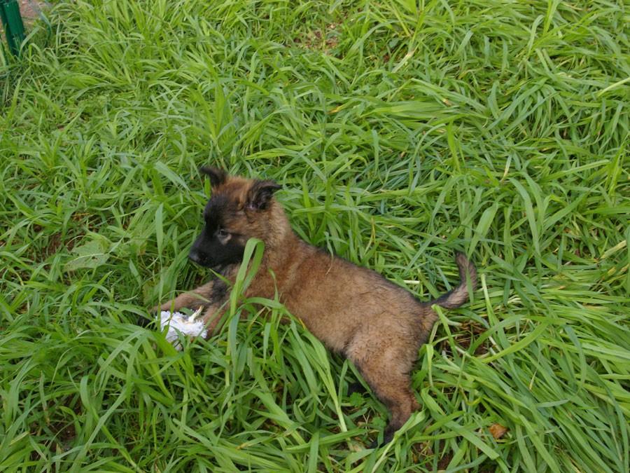 Cours de dressage et d'éducation canine dans les